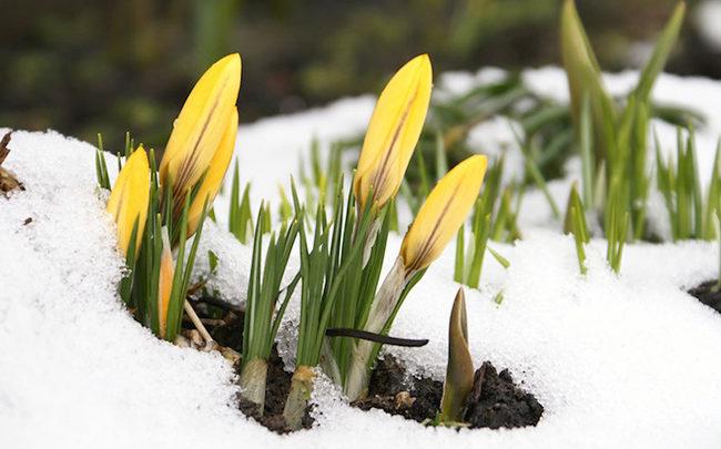 Legfrissebb előrejelzés: Van ok az örömre, ekkor érkezik a tavasz!