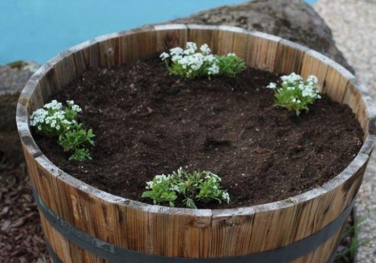 A család bolondnak nézte, hogy csak 4 virágocskát ültetett a nagy dézsába